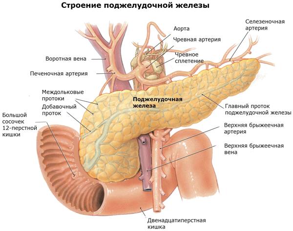 Эхогенность поджелудочной железы повышена – что это такое?