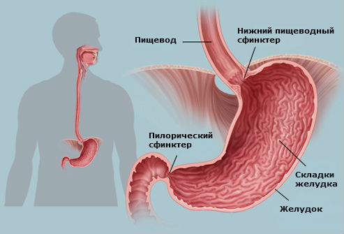 Засорение желудка: симптомы и лечение