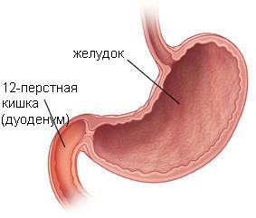 Желудок и дуоденум