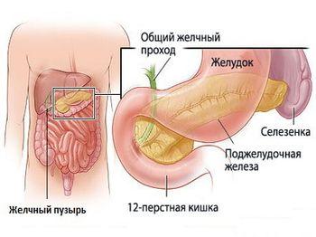 Гипотония желчного пузыря – как проводится лечение?