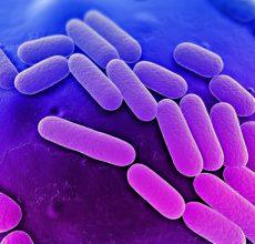 Чем опасна клебсиелла в кишечнике?