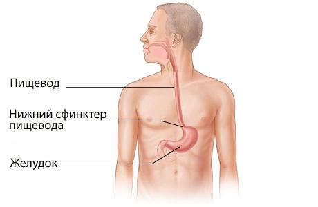 Соединение пищевода и желудка