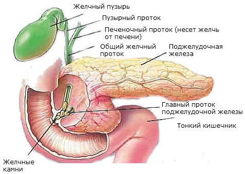 Симптомы недостаточности поджелудочной железы и ее разновидности