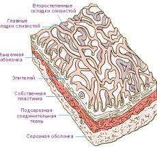 Почему возникает уплотнение стенок желчного пузыря?