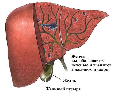 История болезни по острому калькулезному холециститу
