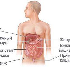 Расположение и анатомия органов брюшной полости человека