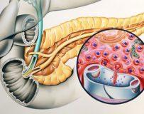 Какие функции выполняют гормоны поджелудочной железы?