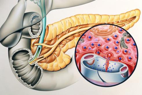 Гормоны поджелудочной железы – какие вырабатываются и каковы их функции?