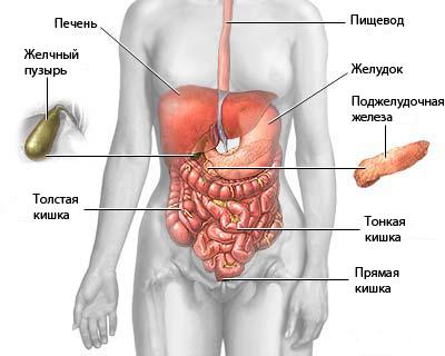 Анатомия забрюшинного