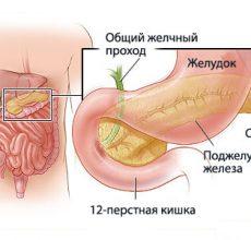 Где находится и почему болит поджелудочная железа?
