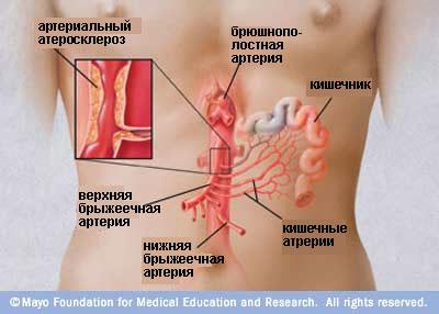 Наименование артерий и сосудов