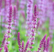 Лечебные травы для желудка и их применение