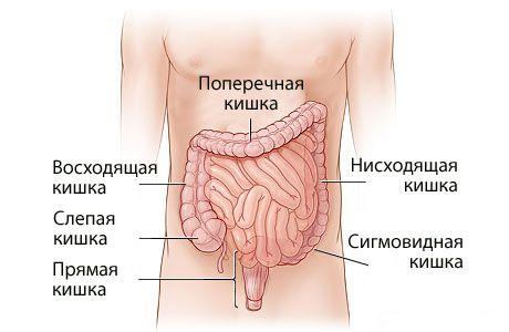 Спазмы в кишечнике: причины, симптомы и лечение, чем снять боль?