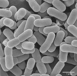 Полезные микроорганизмы