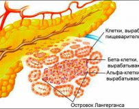 Как устранить нехватку ферментов поджелудочной железы?