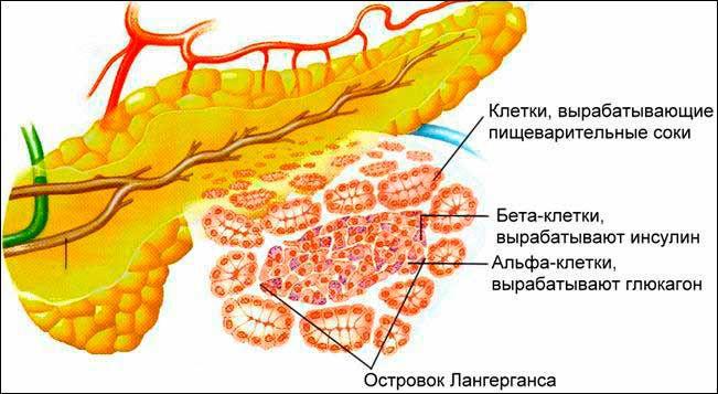 Ферменты поджелудочной железы: симптомы нехватки, как восстановить?