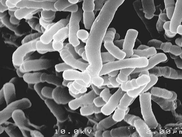 Микроорганизмы и бактерии