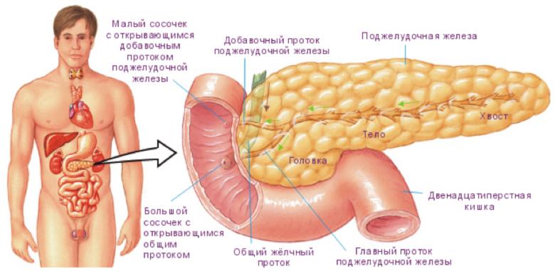 Хронический паренхиматозный панкреатит: симптомы и лечение