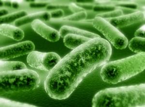 Диета при дисбактериозе кишечника у взрослых: правильное питание