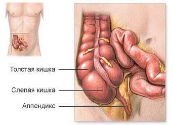 Анатомия слепой кишки