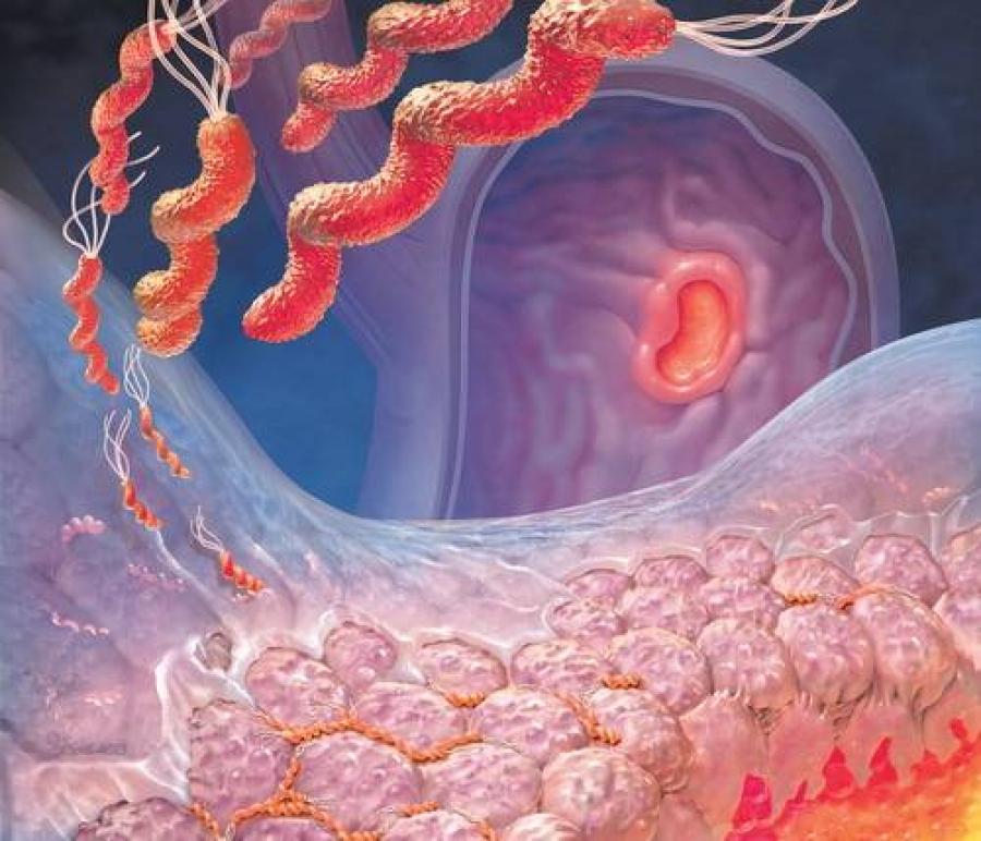 Бактерии, вызывающие заболевание
