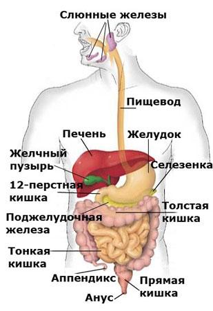 Диета при язве двенадцатиперстной кишки: каким должно быть питание?