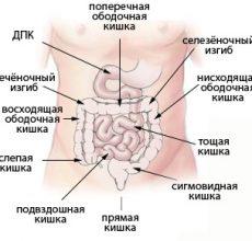 Функции и устройство слепой кишки в организме человека