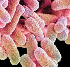 Симптомы и лечение вирусного гастроэнтерита