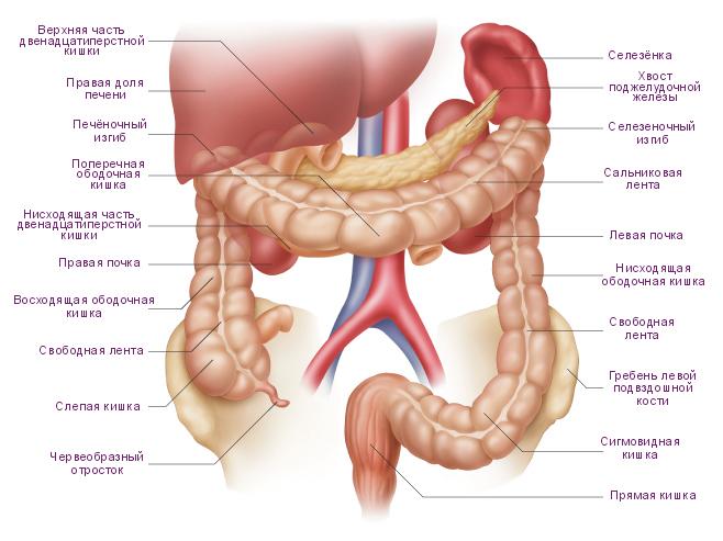 Рак толстой кишки: первые симптомы и признаки на ранних стадиях