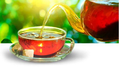 Заваривание антипаразитарного чая