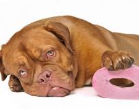 Лечим понос у собак