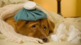 Проблемы с ЖКТ у собаки
