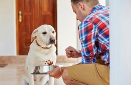Причины возникновения поноса у собак, его лечение и советы от ветеринаров