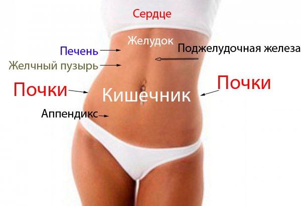 Органы внутри человека