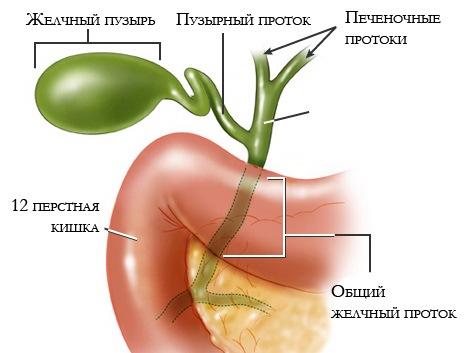 Бескаменный холецистит: симптомы и лечение болезни