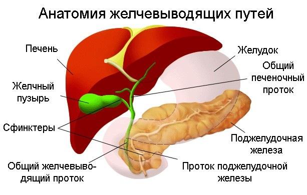 Диета при заболеваниях желчного пузыря – что нужно кушать?