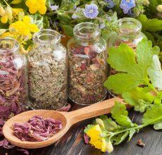 Использование трав при панкреатите поджелудочной железы