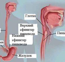 Симптомы и лечение заболеваний пищевода