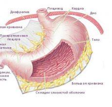 Виды, признаки и лечение катарального гастрита