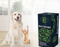 Врачи и пациенты с отзывами о Bactefort