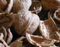 Рецепты для лечения полипов желудка народными средствами