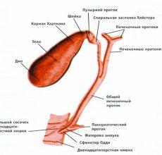 Какие функции желчного пузыря в организме человека?