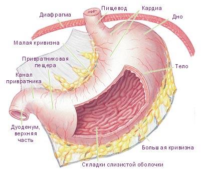 Болит желудок вверху посередине – что делать?