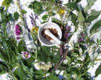 Лечение травами поджелудочной железы и печени