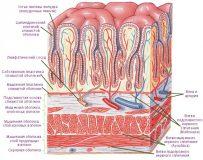 Восстановление слизистой желудка народными средствами