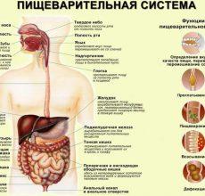 Ноющие боли в желудке — следствие проблем с ЖКТ