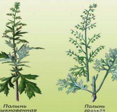 Использование трав от глистов и паразитов у человека