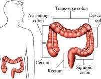 Симптомы и методы лечения заболеваний поперечно-ободочной кишки