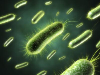 Бактерии, вызывающие инфекцию