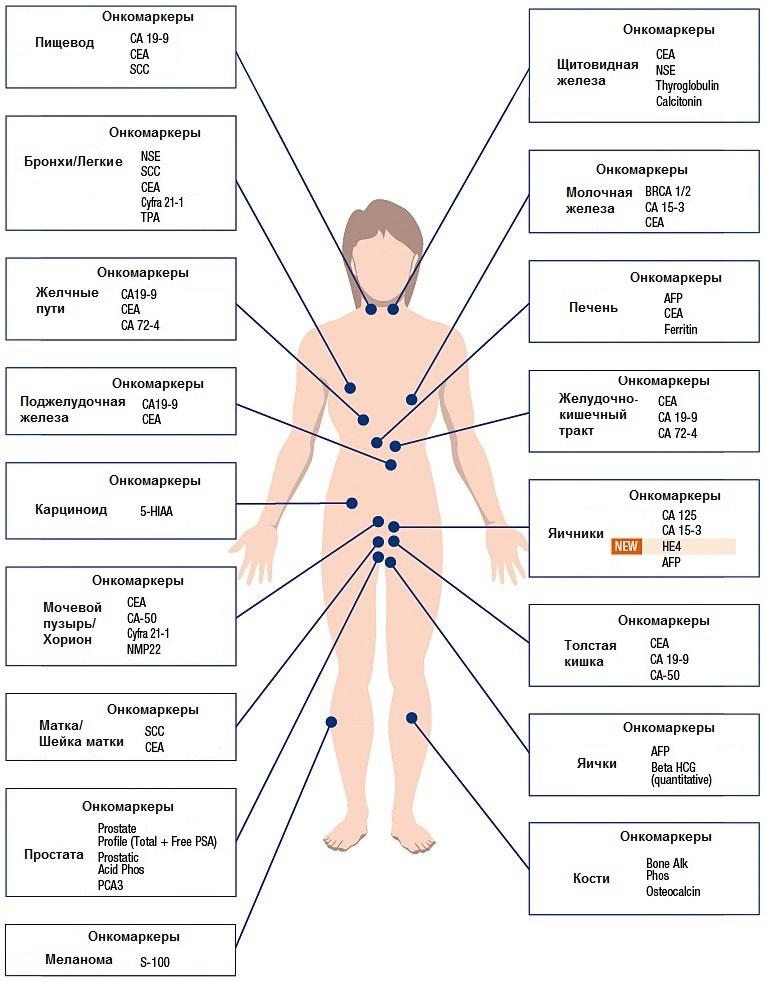 Различные виды онкомаркеров